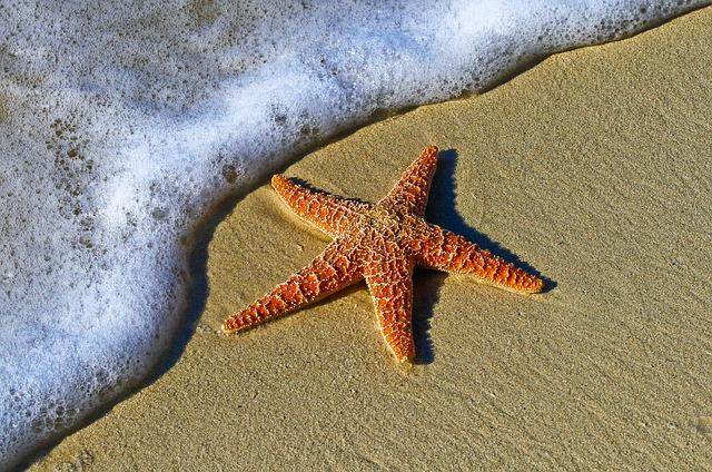 Spiritual Significance of Starfish